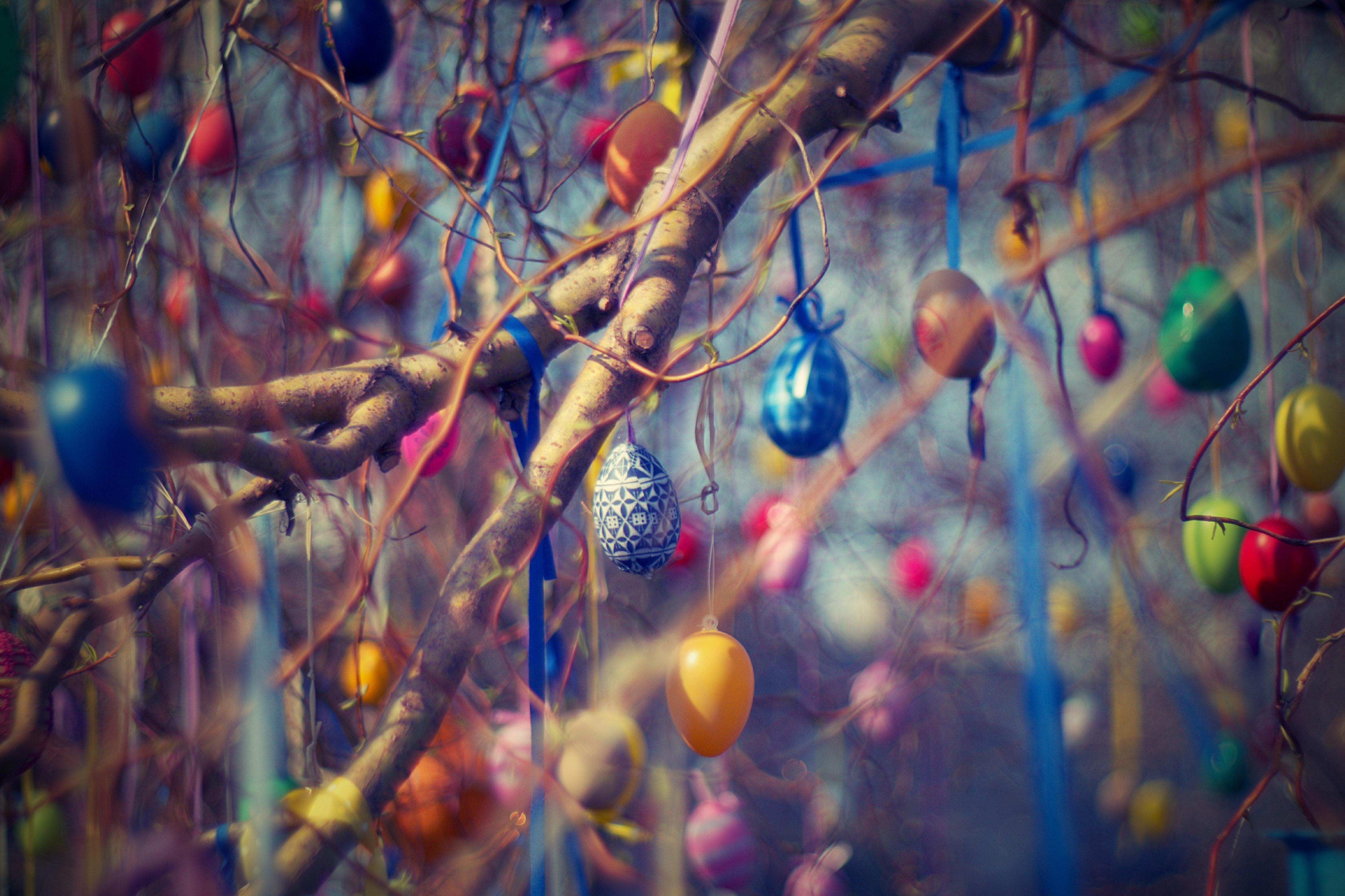 art-blur-branches-210217